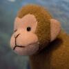 投資家の猿